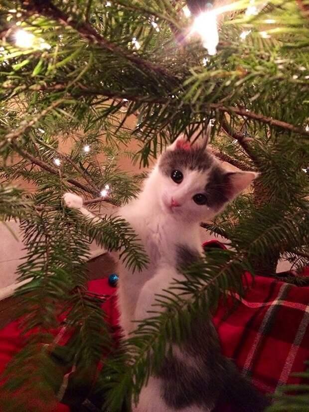 """20. """"Я как-то не уверен, что эта затея с елкой - правильная..."""" животные, новый год, праздник к нам приходит, разрушительная сила, рождество, собаки и кошки, юмор"""