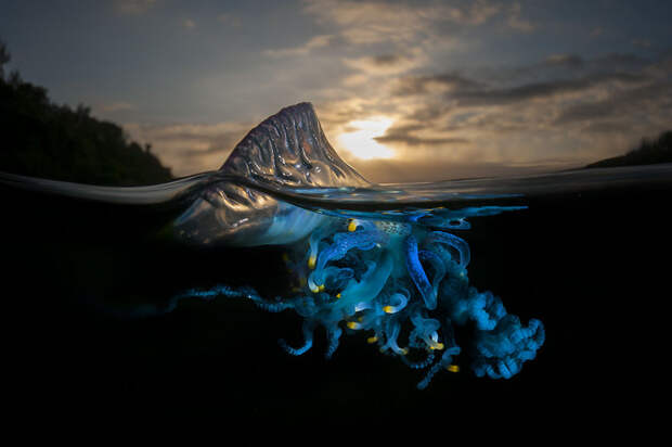 Параллельная Вселенная. Удивительные животные, скрывающиеся под волнами