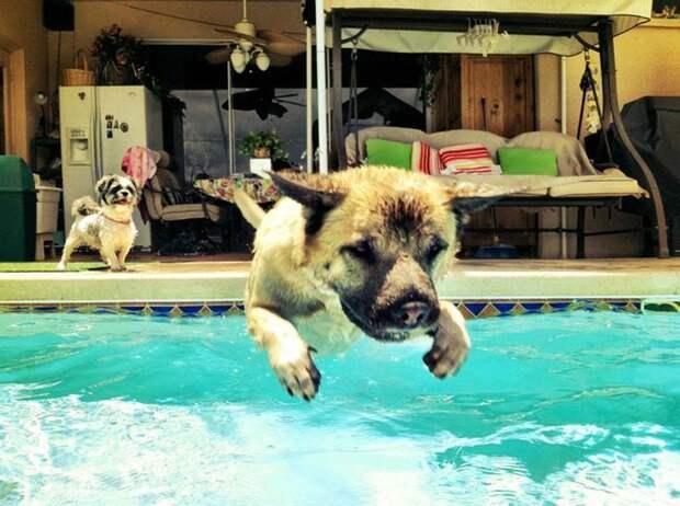 6. Даже второй щенок в шоке от такой улетности бассейн, животные