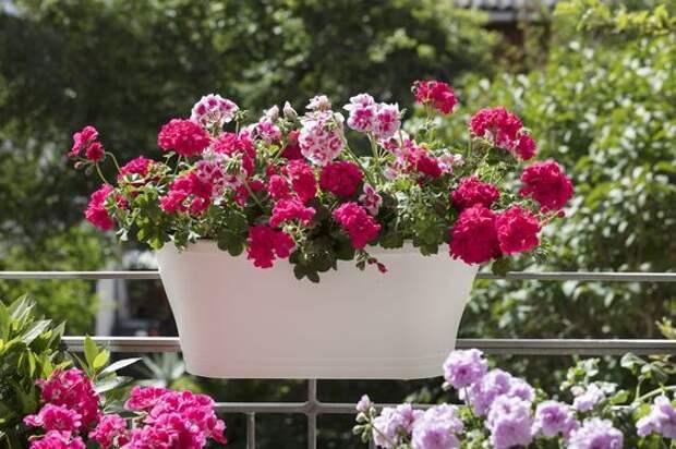15 красиво цветущих растений, которые отлично живут в горшках