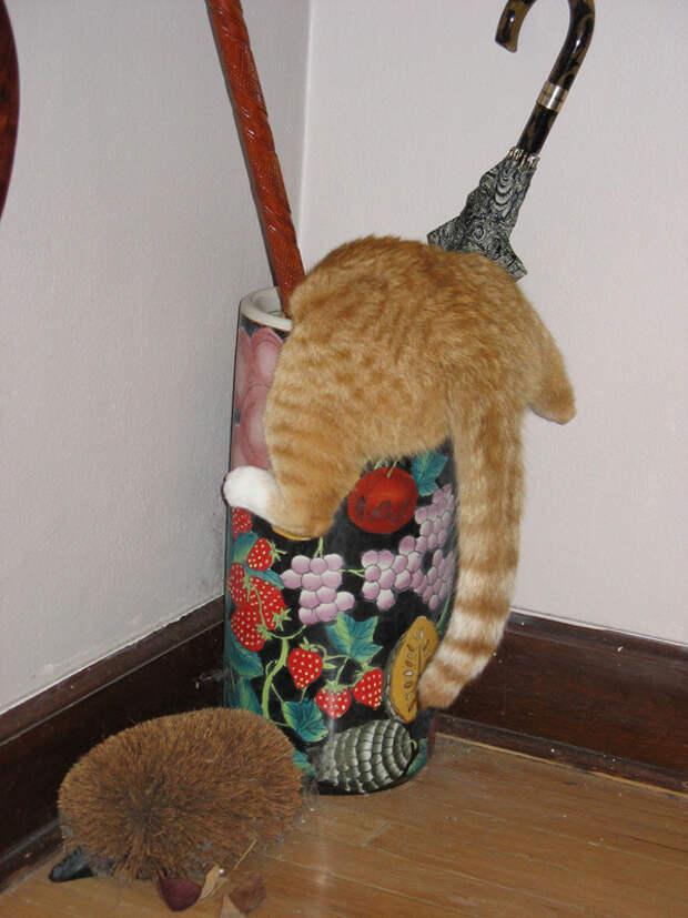 7.  кот, поза