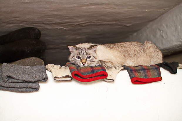 На печке за всем наблюдает наша городская кошка Нюша деревня, животные, история, коты