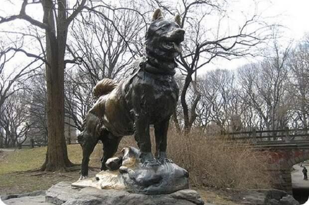 Реальная история Балто – ездового пса, спасшего город от эпидемии в начале ХХ века