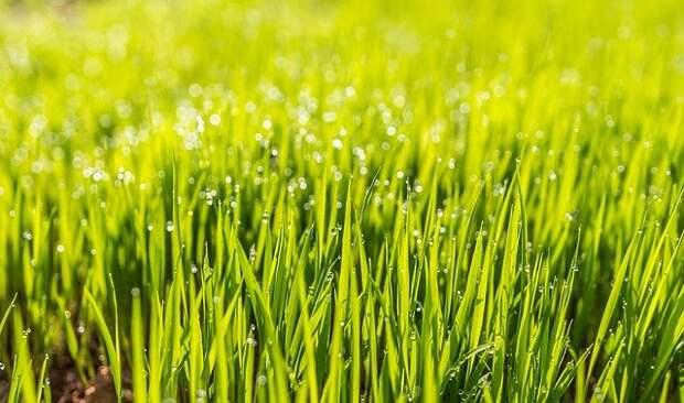Газонную траву подкормили комплексным удобрением во дворе дома на Шоссейной