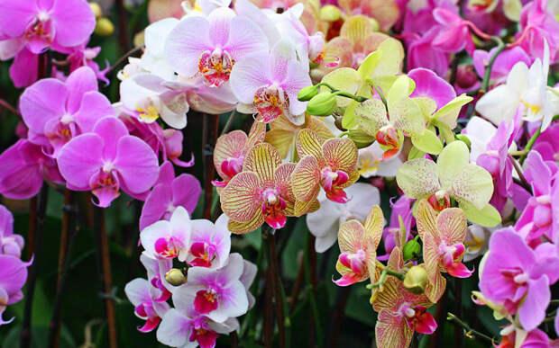 Все про орхидею от А до Я: фото, описание и уход
