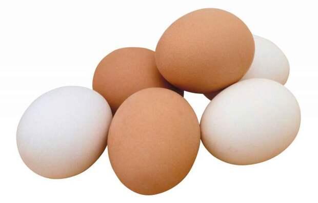 Яйцо 1 категории, Продукты питания и сырьё - Яйцо, птица