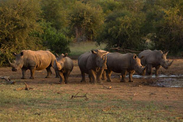 Браконьеры в ЮАР получили 105 лет тюрьмы на троих за убийство носорогов