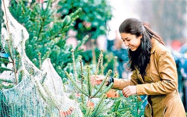 Почему живые новогодние ёлки наносят меньше вреда экологии, чем искусственные?