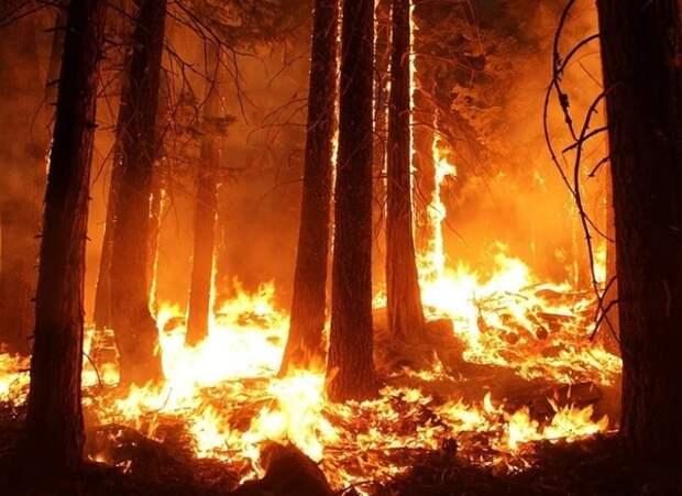 В Ростовской области горят леса, в трёх районах - режим ЧС