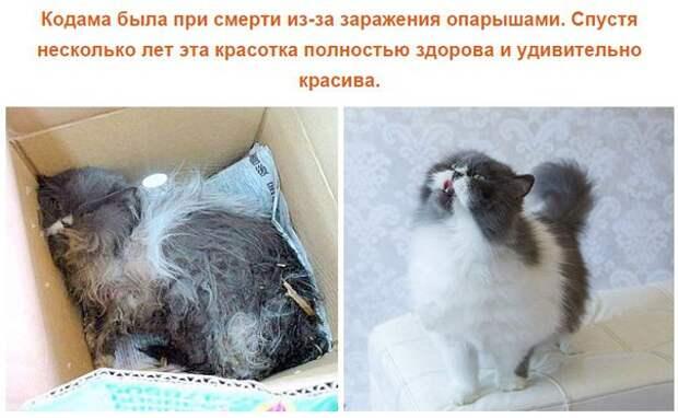 Спасенные кошки, которых подобрали и полюбили. Фото до и после