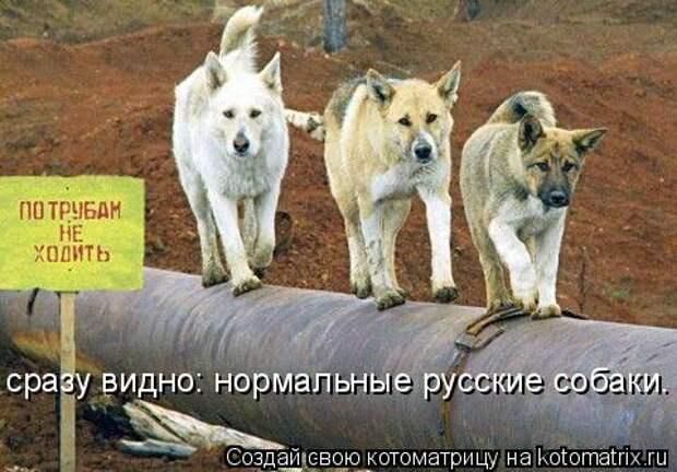 Котоматрица: сразу видно: нормальные русские собаки.