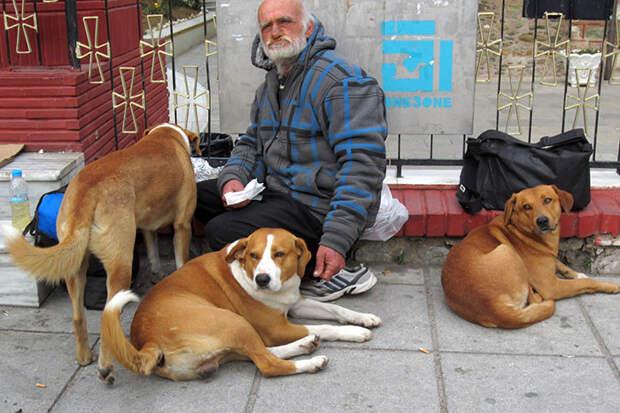 30. Делится всем со своими любимцами бездомный, любовь, собака
