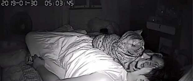 Запись со скрытой камеры: что делает кот, когда спит хозяин