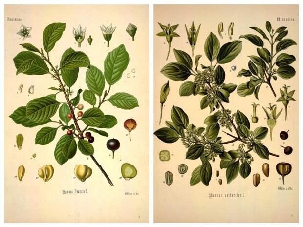 Какие ягоды в лесу нельзя есть: опасные кустарники