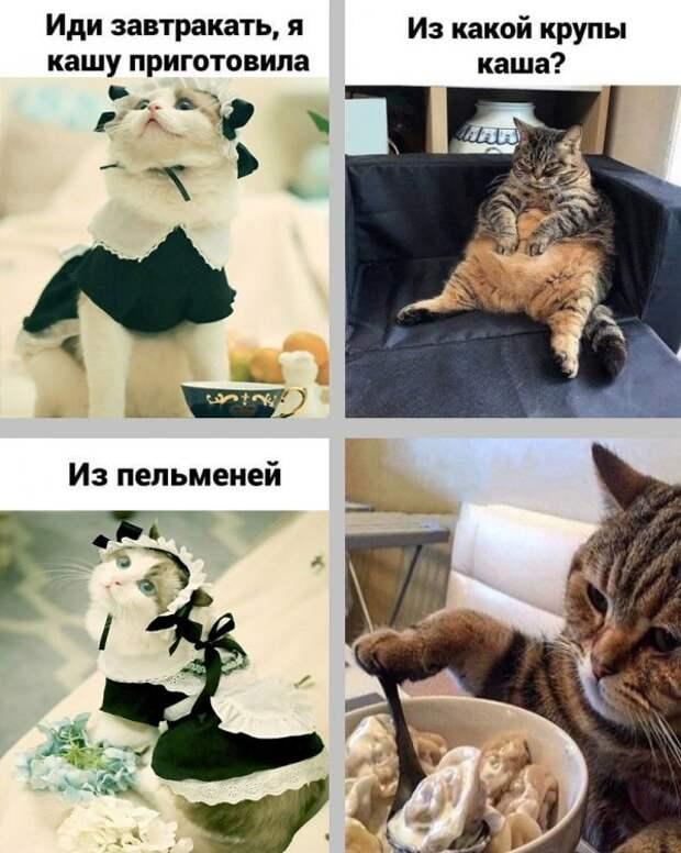 Нестандартный юмор :)