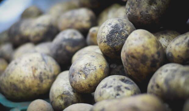 Дороже, чем бананы. Омский министр Дрофа объяснил внезапный «картофельный парадокс»