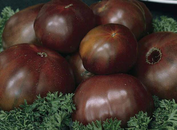 Разноцветные сорта помидоров, которые стоит посадить в 2016 году