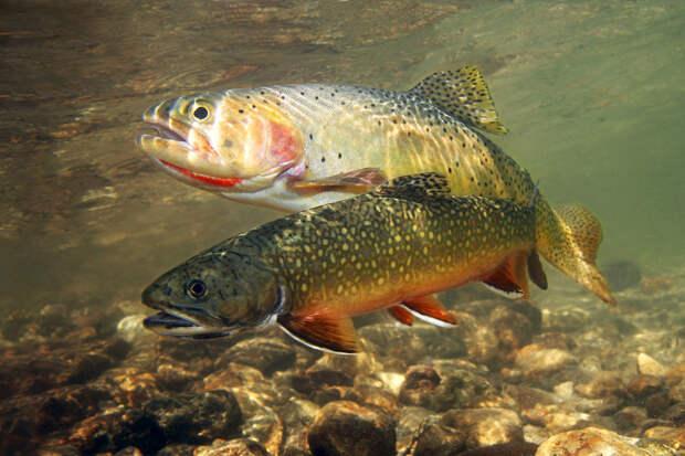 В Томске откроется акваферма для выращивания ценных пород рыб