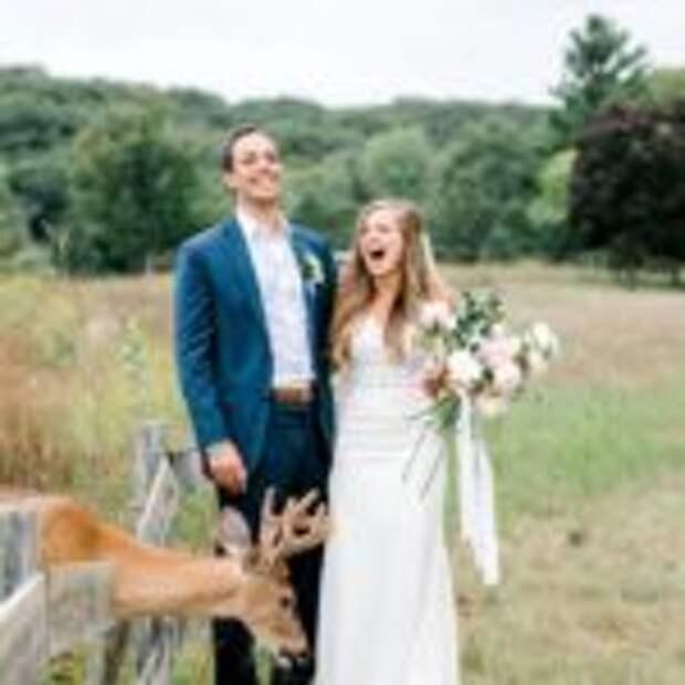 Олень захотел букет невесты