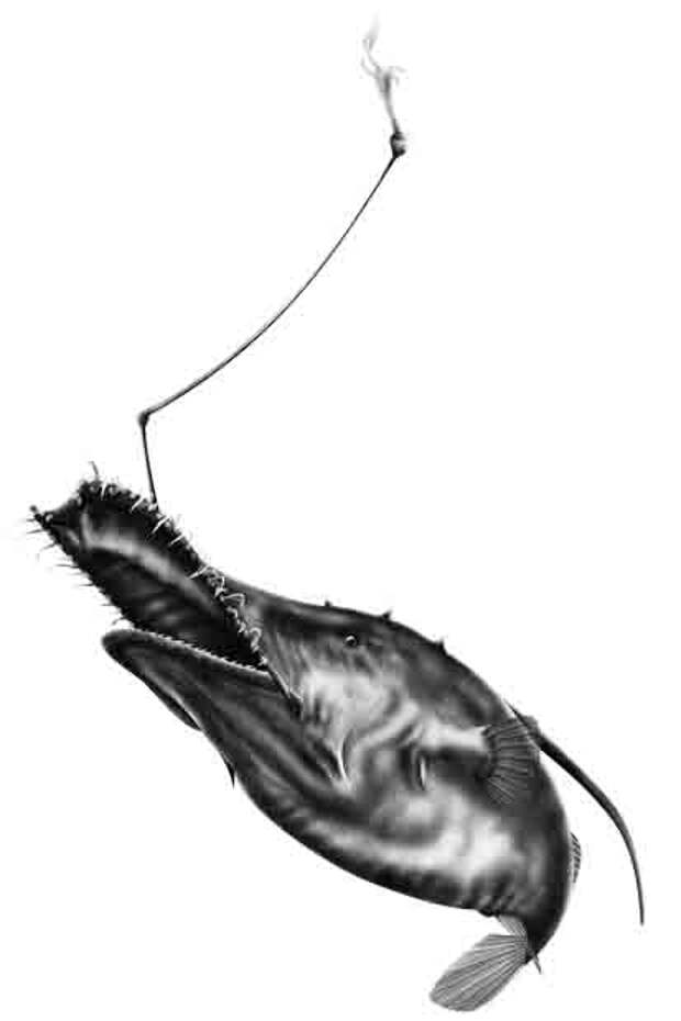 Лазиогнаты (лат. Lasiognathus) (англ. Wolf Trap)