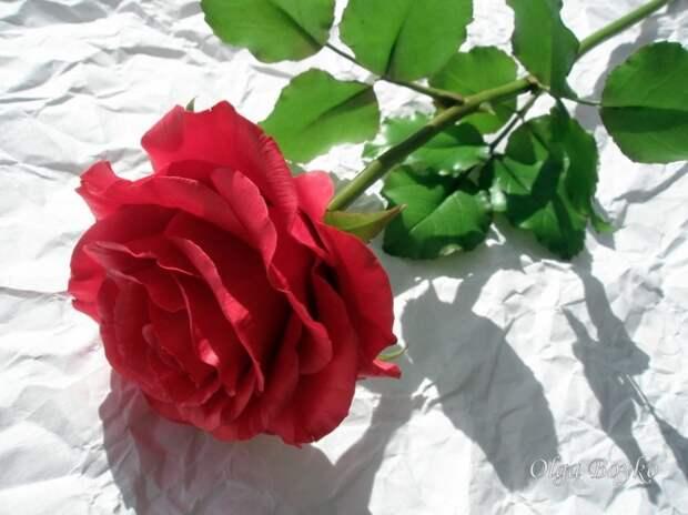 Думаете, это обычная роза? Как бы не так!