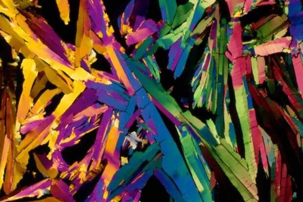 25 снимков под микроскопом, доказывающих, что каждая вещь — это вселенная