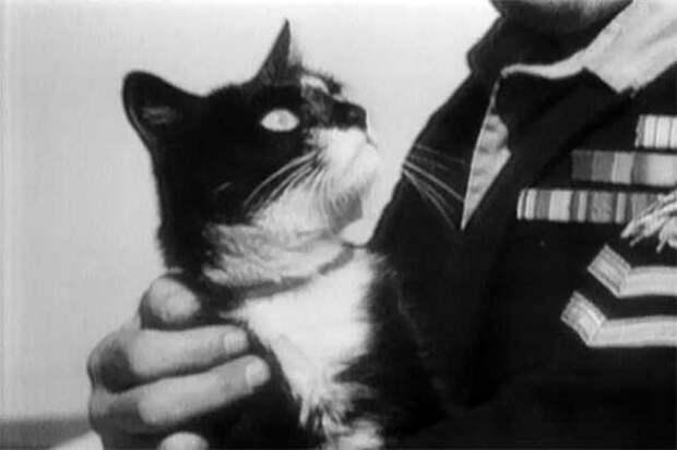Хочу вам про кота рассказать