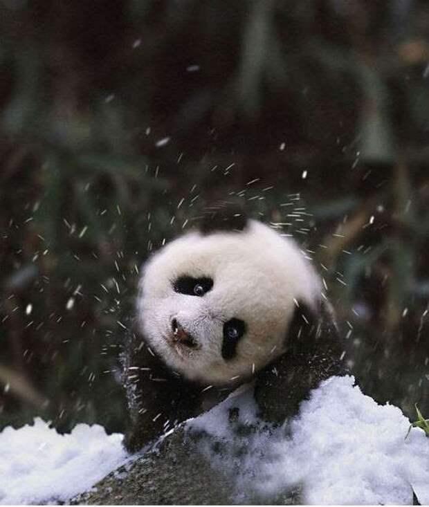 Умилительные фотографии животных, впервые увидевших снег