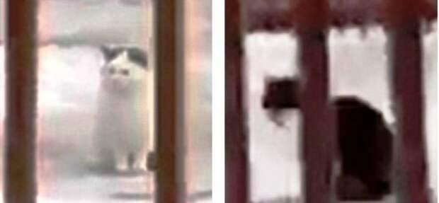 В алматинском зоопарке медведь подружился с тремя кошками