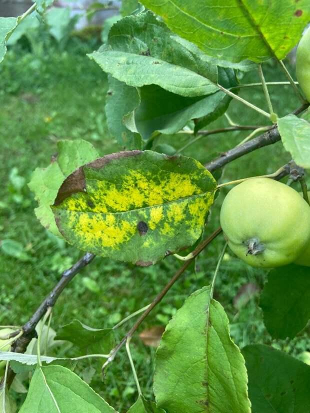 Осторожно, грибок: обзор лучших фунгицидов для лечения растений