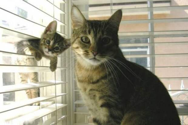 ТЕРЕМОК. Малыши и мамочки