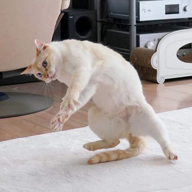 10 клевых фото кота из Японии, который танцует лучше тебя