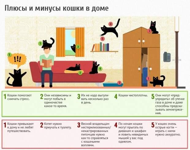 польза и вред от кошек в доме