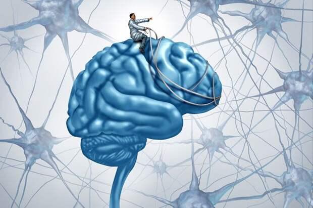 Силой мысли. Размышления ученого о тайнах мозга