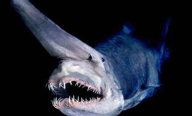 10 почти нереальных существ из Марианской впадины