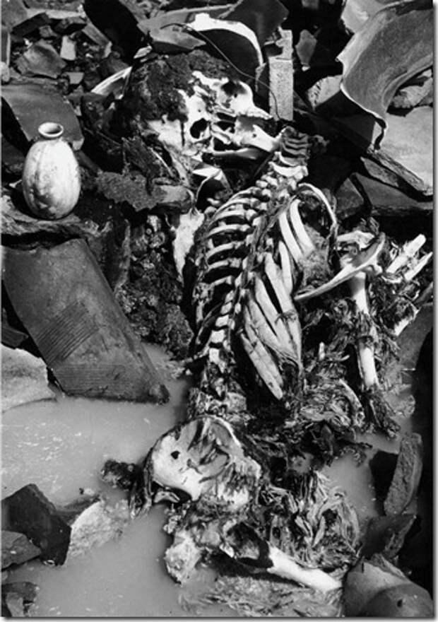 Скелетированный труп