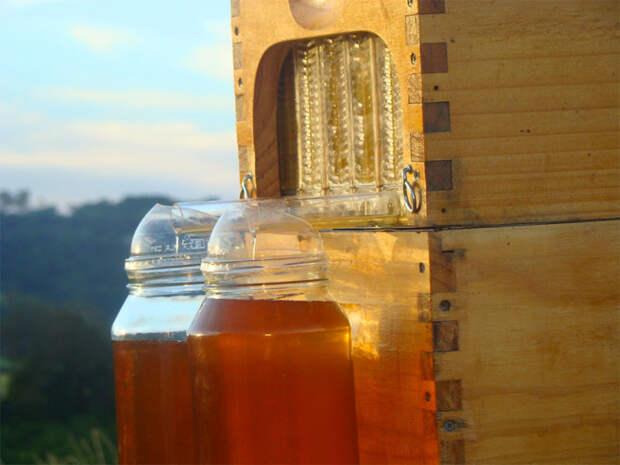 мёд на вынос