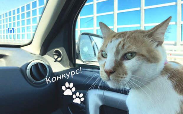 Котик с Крымского моста предложил собственный ароматизатор