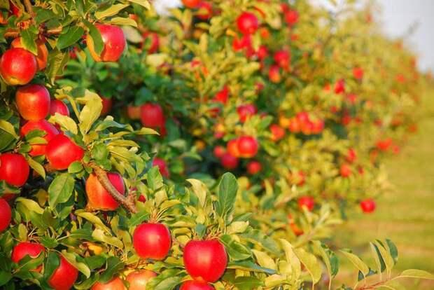 Дозированное питание для сада