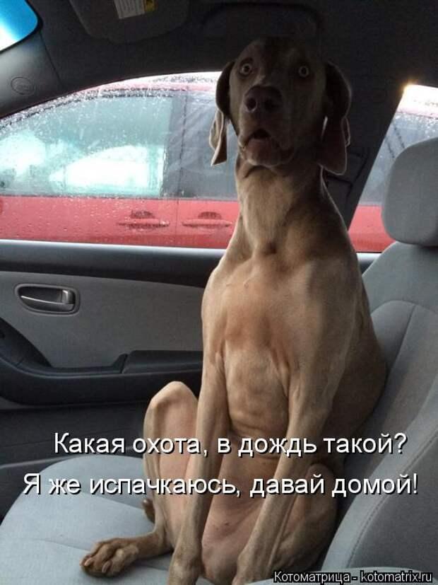 Котоматрица: Какая охота, в дождь такой? Я же испачкаюсь, давай домой!