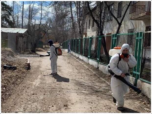 Обработка деревьев от клещей началась в Ангарском округе
