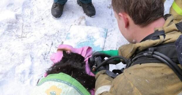 Смоленские пожарные спасли из горящей квартиры женщину и откачали ее кота видео, доброта, животные, кот, пожар, смоленск, спасение кота из пожара