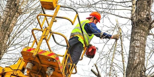 На Ленинградском шоссе обрезали опасные ветки деревьев