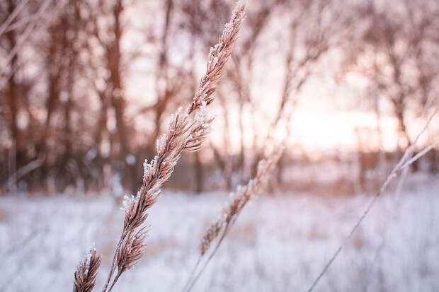 Озимые культуры пережили морозы Удмуртии