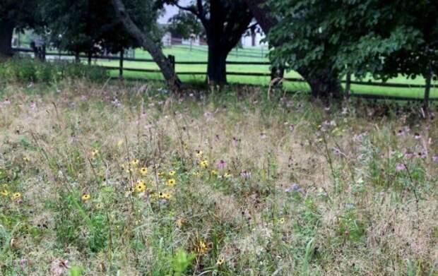 Советы для вашего сада от Томаса Райнера