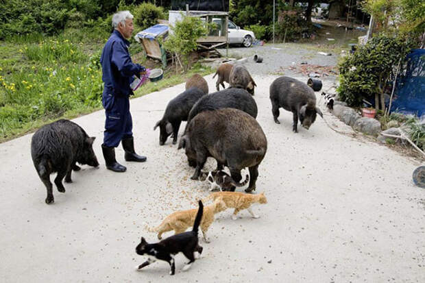 Японец живет в зоне отчуждения ради животных