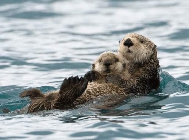 Мама, она и у животных мама