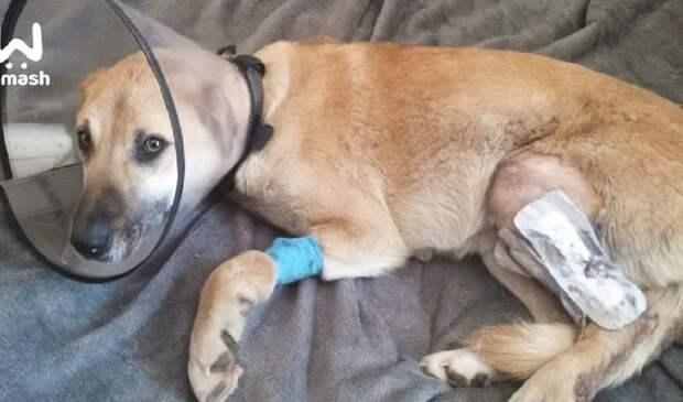 Зоозащитники обвиняют работников выксунского предприятия в убийстве собак