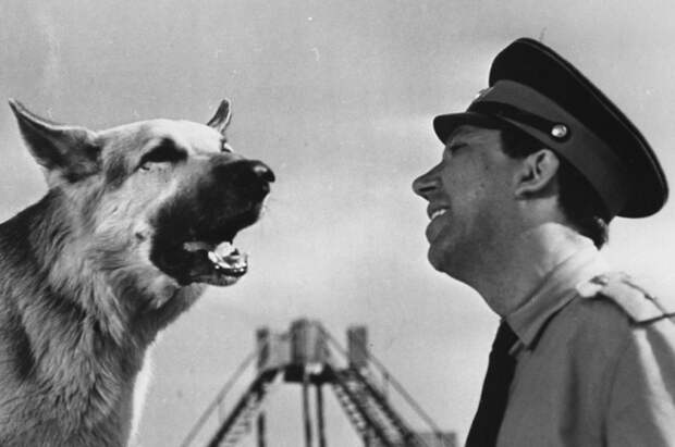 Роль Мухтара в фильме исполнили три собаки.