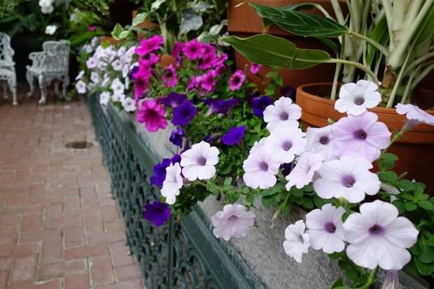 Biltmore Gardens - фотопутешествие